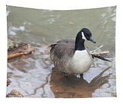Duck Wading In A Stream Tapestry
