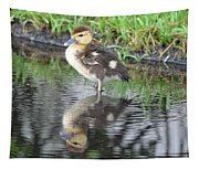 Duckling With Reflection Tapestry