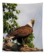 Eagle Portrait IIi Tapestry