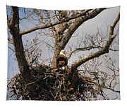 Eagles Watchful Eye Tapestry