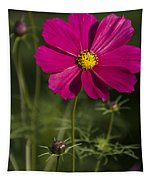 Early Dawns Light On Fall Flowers V 03 Tapestry