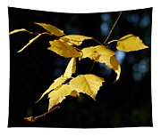 Early Fall Of  Downy Birch Tapestry
