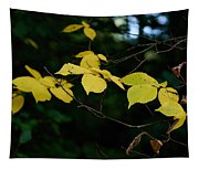 Early Fall Of Wych Elm Tapestry