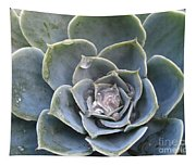 Echeveria With Water Drops Tapestry