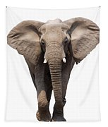Elephant Isolated Tapestry