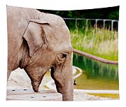 Elephant Open Mouth Tapestry