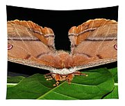 Emperor Gum Moth - 6 Inch Wing Span Tapestry