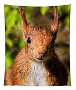 Eurasian Red Squirrel Tapestry
