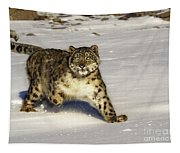 Evening Prowl Tapestry