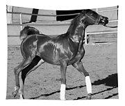 Exercising Horse Bw Tapestry