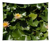 Exotic Colored Waterlilies In The Hot Mediterranean Sun Tapestry