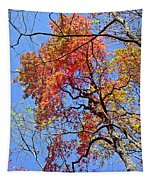 Fall Trees 2 Of Wnc Tapestry