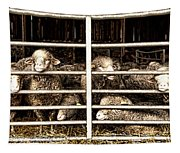Family Portrait Behind Bars Tapestry