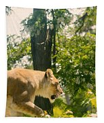 Female Lion On The Move Tapestry