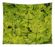 1m2436-ferns At The Base Of Mt. Robson  Tapestry