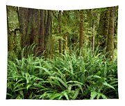 1a2912-ferns In Rain Forest Canada  Tapestry