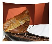 Flame-bordered Charaxes Butterfly #2 Tapestry