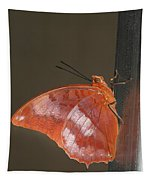 Flame-bordered Charaxes Butterfly #3 Tapestry