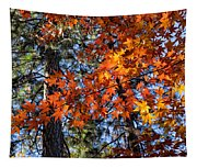 Flaming Maple Beneath The Pines Tapestry