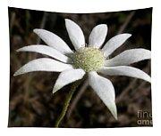 Flannel Flower Tapestry