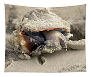 Florida Fighting Conch Tapestry