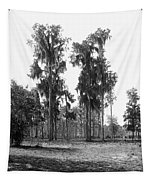 Florida Spanish Moss Tapestry