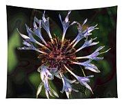 10415 Cornflower Tapestry