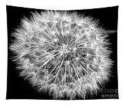 Fluffy Dandelion On Black Tapestry