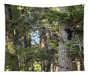 Forest Black Bear Cub Tapestry