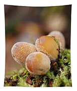 Forest Mushrooms Tapestry