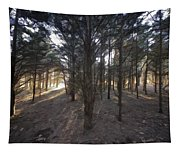 Forest Of Light Tapestry
