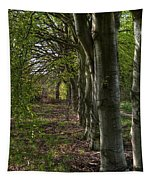 Forest Walk Hdr Tapestry