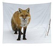 Foxy.. Tapestry