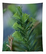 Fresh Growth Redwood Tapestry
