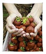 Fresh Picked Strawberries Tapestry