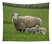 Freshly Made - Winter Lambs Tapestry
