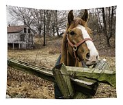Friendly Horse Tapestry
