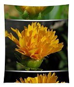 From Bud To Bloom - Coreopsis Named Early Sunrise Tapestry