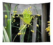 From Bud To Bloom - Fireworks Allium Tapestry