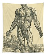 Front Of Male Human Body.anatomical Tapestry