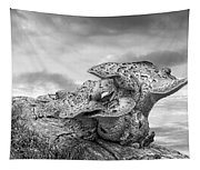 Funky Fungi Black And White Tapestry
