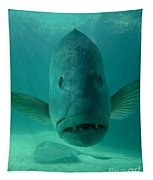 Funny Fish Face Tapestry