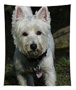 Fuzzy Tapestry
