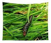 Gallium Sphinx Caterpillar Tapestry