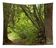 Garibaldi Old Growth Cedars Tapestry