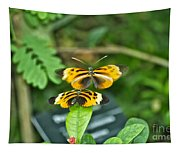 Gentle Butterfly Courtship 02 Tapestry