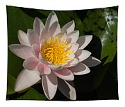 Gently Pink Waterlily In The Hot Mediterranean Sun Tapestry