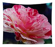 George Burns Floribunda Rose Tapestry