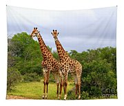 Giraffe Males Before The Storm Tapestry