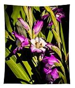 Gladiolus Tapestry